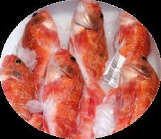 pescado-2